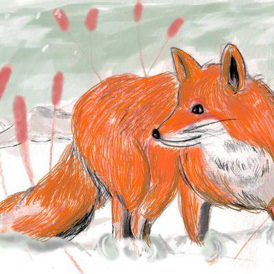 Illustrazione Foxy - Malastrella